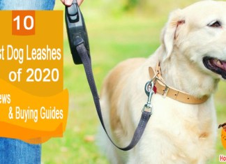 Top Ten Best Dog Leashes Of 2020