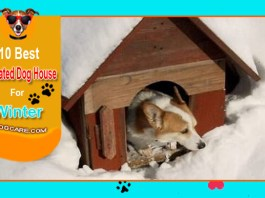 10 Best Insulated Dog House For Winter Reviews