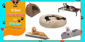 10 Best Soft Bed For Small Dog Reviews