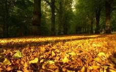 Autumn Wallpapers (11)