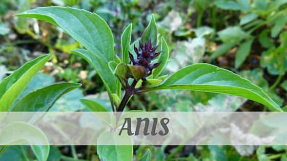 How To Say Anis (French)