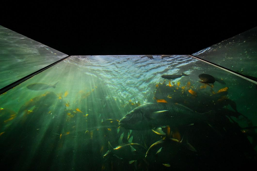 2Oceans Aquarium | How Far From Home