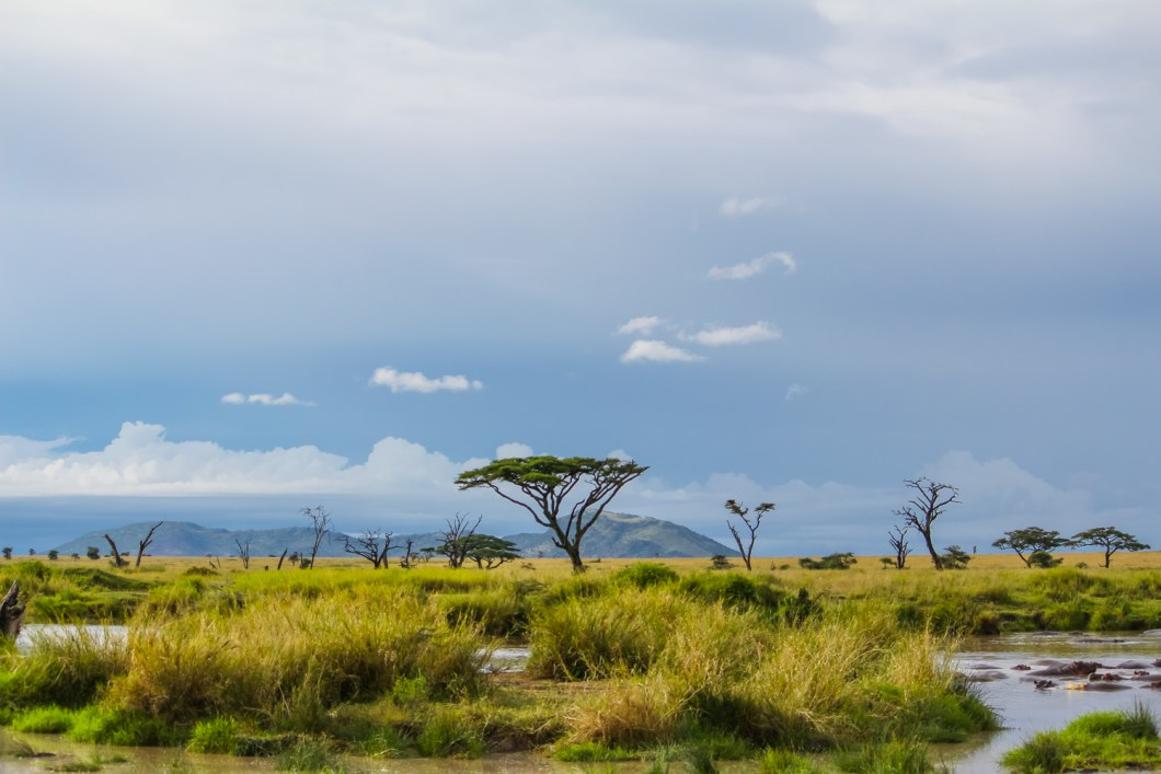 Serengeti Ngorongoro | How Far From Home