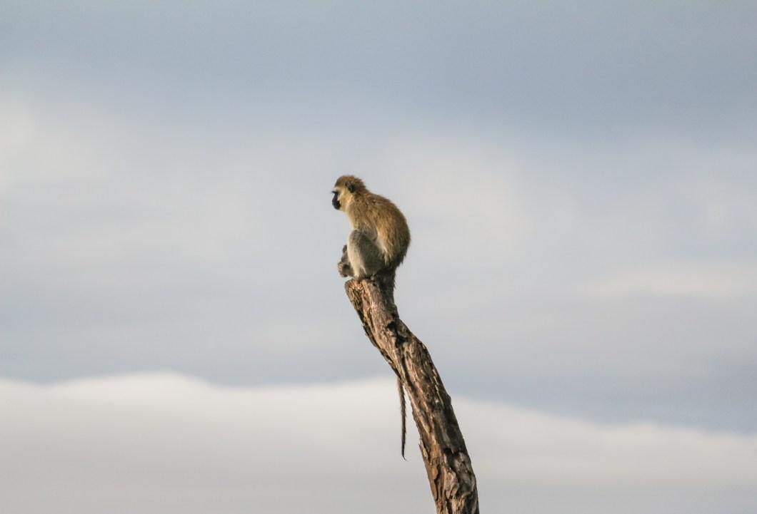 Serengeti Ngorongoro | How Far From Home