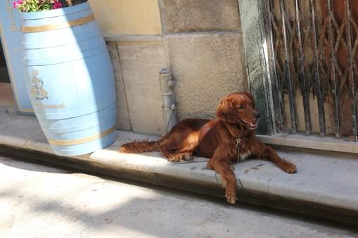 Jeden z miliona psów w Trapani