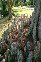 Zagadkowe organiczne stalagmity
