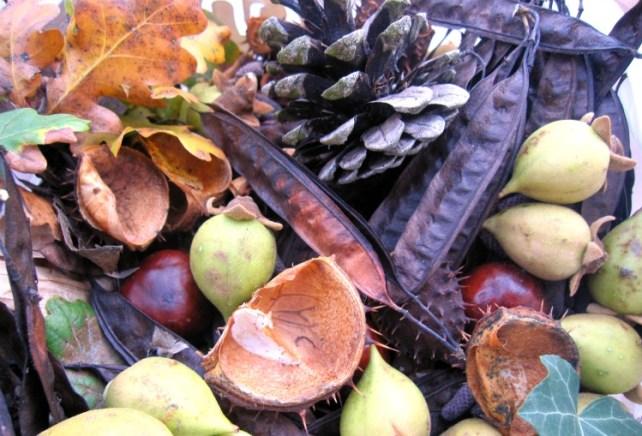 collecte land art automne
