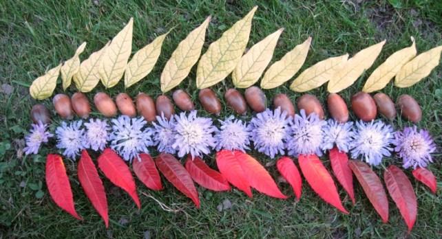 Land Art automne lignes de feuilles