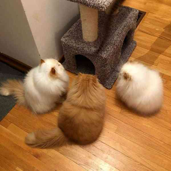 cats and kittens 2019123001 - 90+ Funny Cats and Kittens Pictures