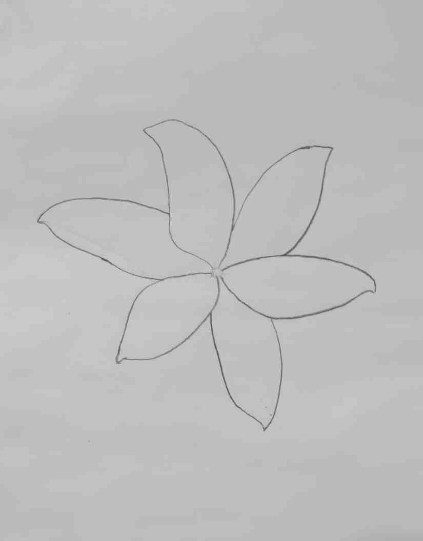 Draw a Lily 2020072102 - How to Draw a Lily: Practice for Beginners