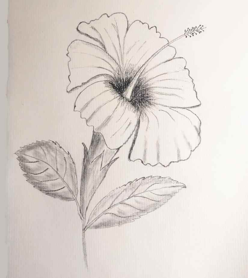 Draw Hibiscus 2020080107 - How to Draw Hibiscus for Beginners Step by Step