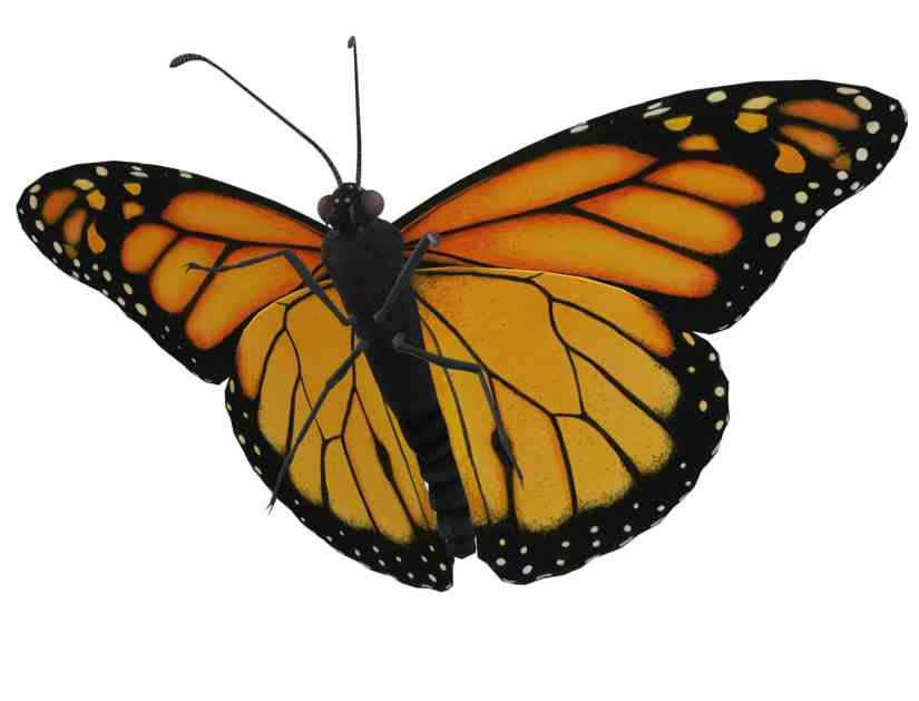 monarch butterfly 5560851 - How to Draw a Butterfly-Step by Step Tutorial