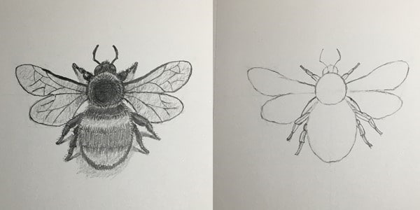 Draw-Bumble-Bee-20201028