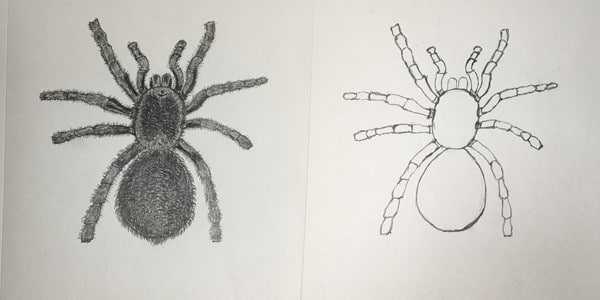 Draw-a-Spider-20201013