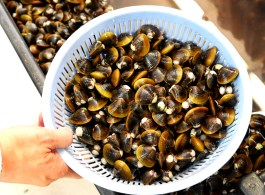 howl-cambodia-town-clams