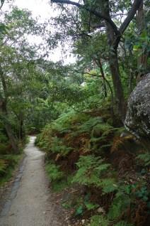 Through bush on the walkway