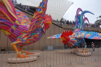 Australia Day at the harbour - Chinese year of the Rooster