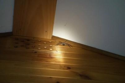 Huntsman in my cabin