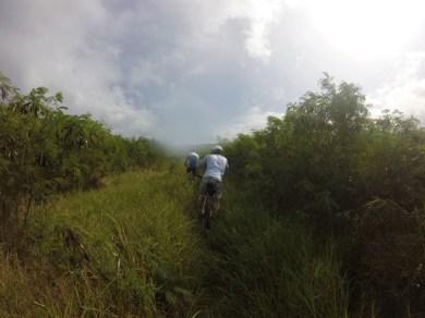 Mountain-biking through the shrubbery!