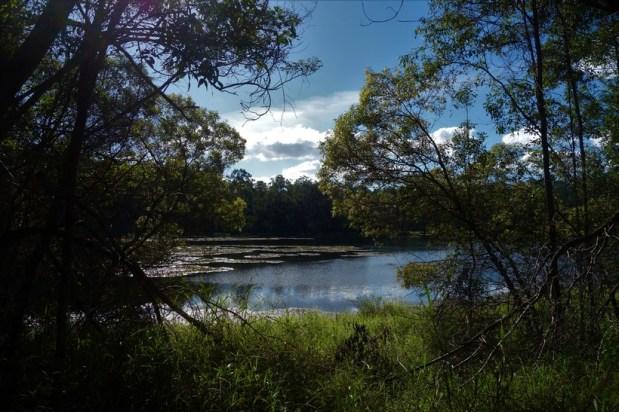 Enoggera Reservoir walk