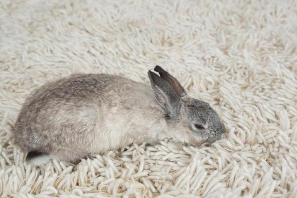 Мой кролик умер — что мне делать с телом? — Сайт эксперта ...