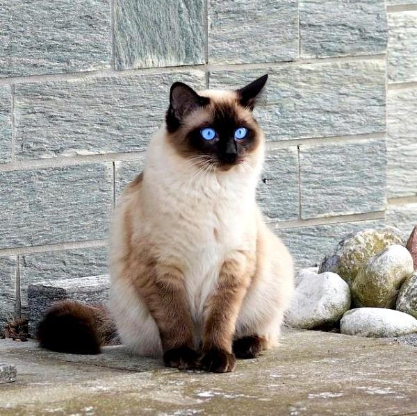 Кишечные паразиты у кошек: симптомы и лечение — Сайт ...