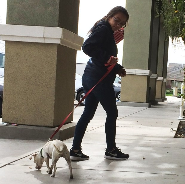 A girl walking a dog