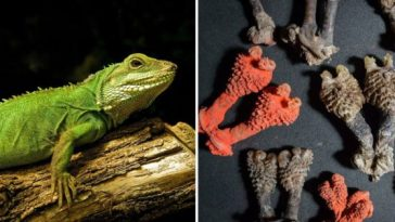 People Are Buying Dried Lizard D*cks Online By Mistake