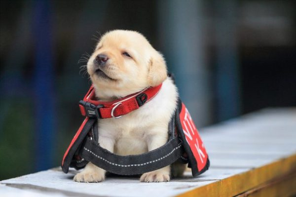 Important Puppies Joining Taiwan's Police Force