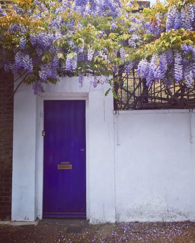 wisteria London Kennington May