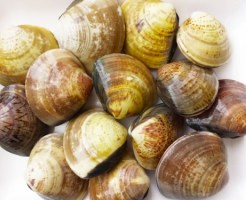 clam-sunanuki-time
