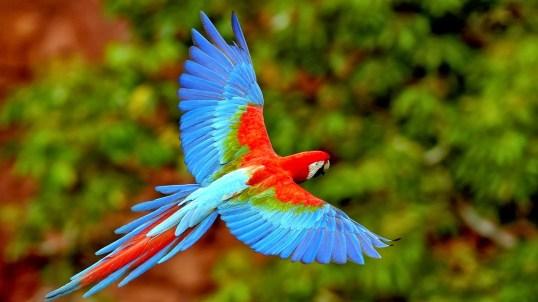 Scarlet macaw. http://s1075320.instanturl.net/mcwtwebdesign4girls.net/2016/f231542.110qaBb5/kaira.html