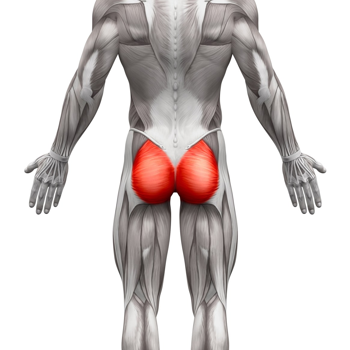 Glutes 101: Anatomy, Function, Basic Exercises