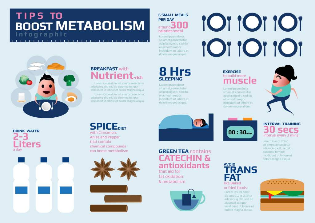 Metabolism Boost muscle building infographic