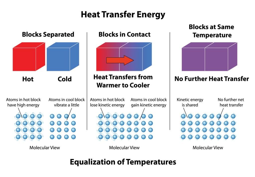 Heat Transfer of Digestive Molecules