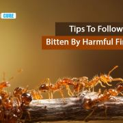Home remedies for Fire ant bites