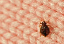 How to Prevent and Control a Bed Bug Infestation