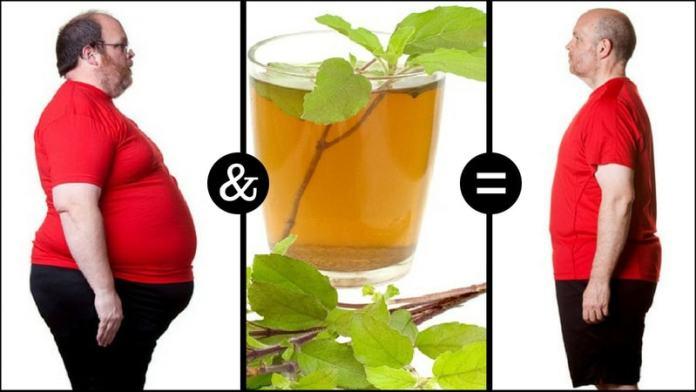 tulsi tea for weight loss