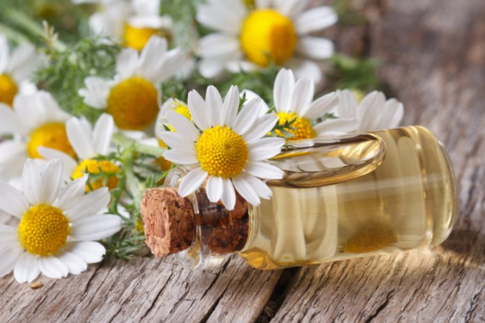 chamomile oil for treating headaches