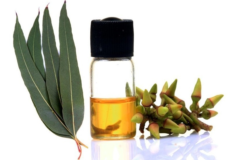 eucalyptus essential oil for bronchitis