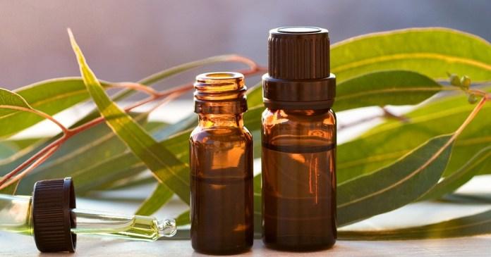 eucalyptus essential oil to treat fever