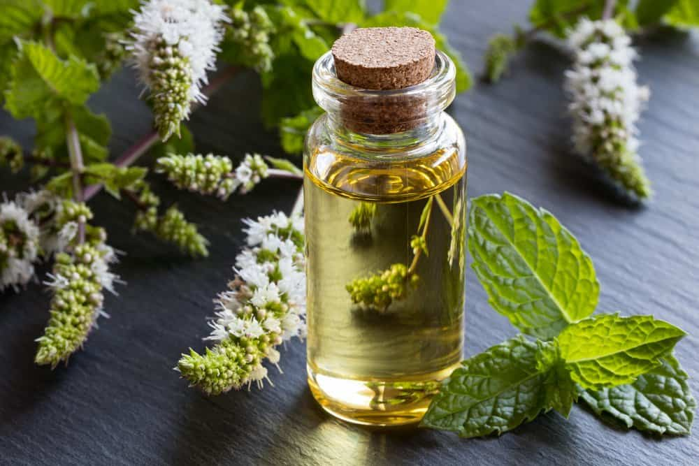 get rid of allergies with oregano oil