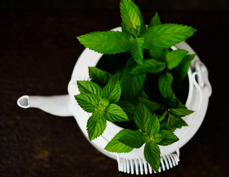 peppermint oil to cure headache