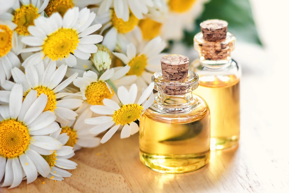 chamomile oil for dandruff