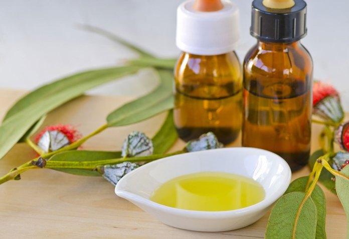 eucalyptus oil for asthma