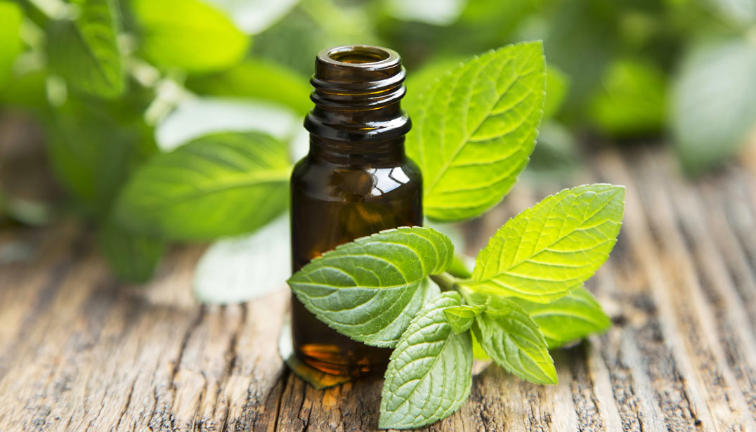pappermint oil for pain