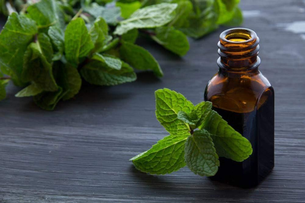 peppermint oil for asthma