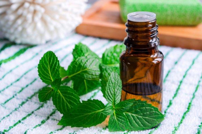 peppermint oil for pneumonia