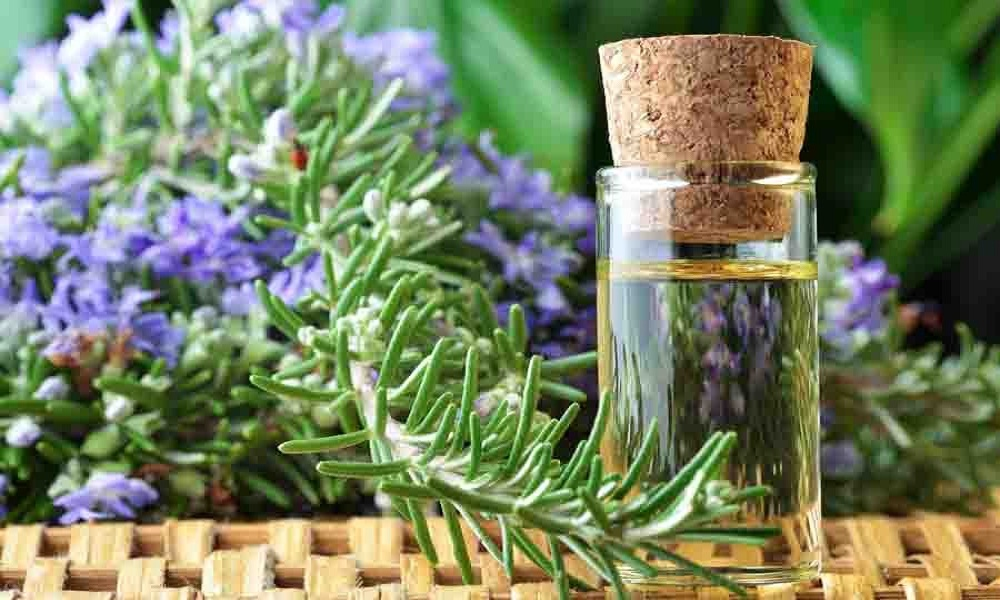 rosemary essential oil for muscle pain