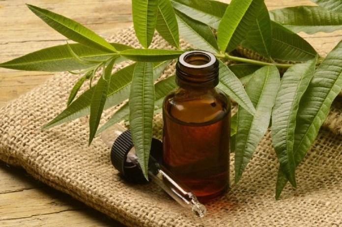 tea tree oil for pink eye